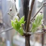 Frühling_Garten_P1210351 004