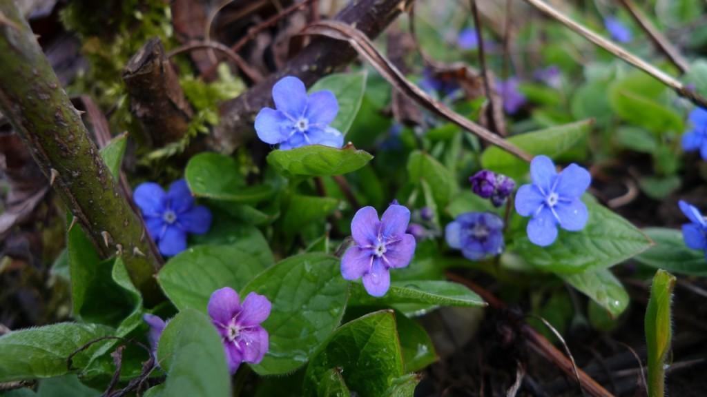 Frühling_Garten_P1210352 005