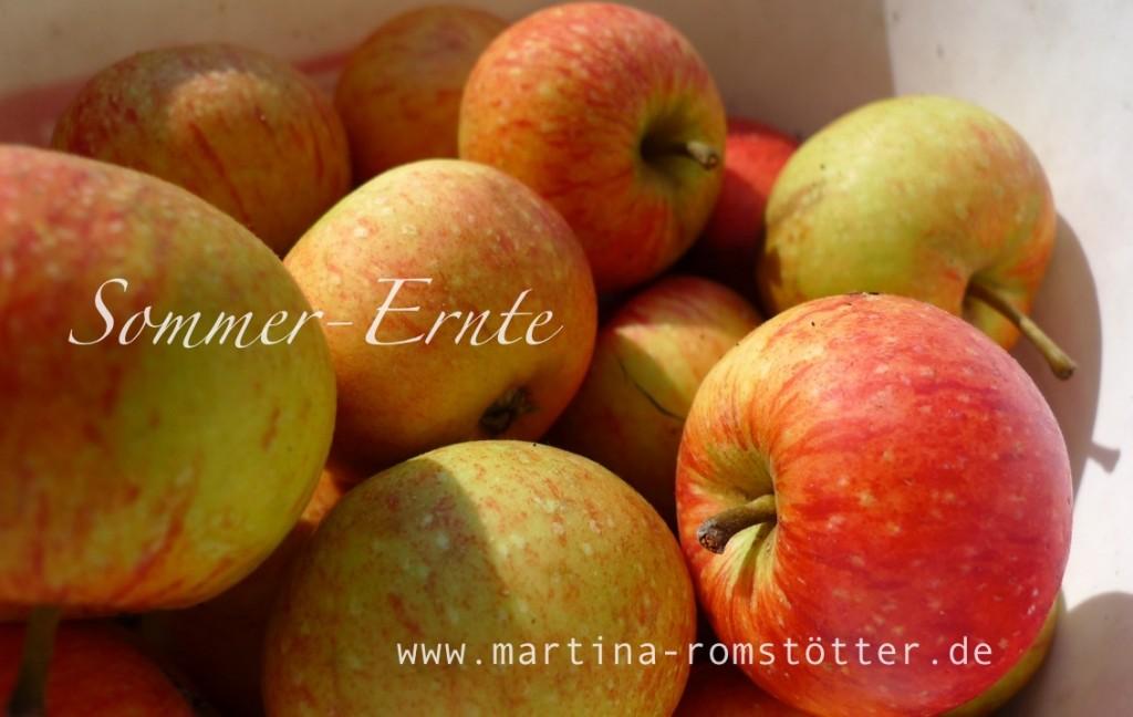 Ernte_P1170177 004