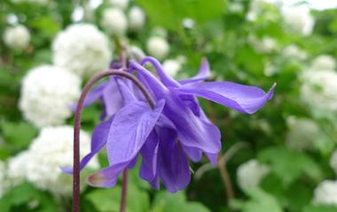 Individuelle Gartenplanung